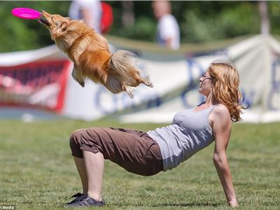 There's a Frisbee around here somewhere: Dog finds its hairdo hampers its chances at Frisbee European championships